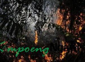 Photo of 8.209 Bom Air Digunakan untuk Padamkan Kebakaran Hutan Riau