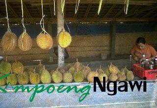 Photo of Durian Khas Ngrambe-Ngawi