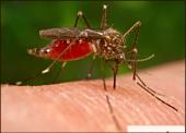 Peneliti Amerika ingin Kembangkan Teknologi untuk Menghilangkan Manusia dari Pandangan Nyamuk