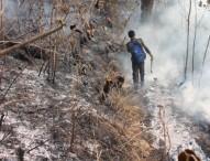 Api Terus Merembet Kebawah dan Mendekati Perkebunan Warga