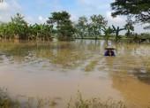 Harga Gabah di Ngawi Turun Akibat Banjir