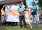 KampoengFarm Salurkan Hewan Qurban ke Desa Binaan
