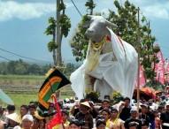 Ritual Budaya Pengarakan Sang Kebo Ketan di Ngawi