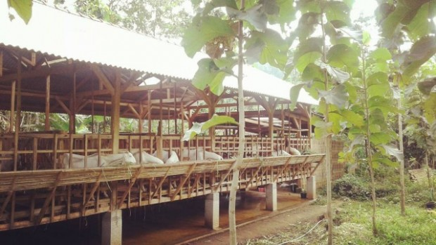 Bumi Retawu Farm Kembangkan Integrated Farming di Ngawi