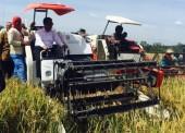 Mentan Jamin Gabah Petani Diserap Bulog 3700 Rupiah