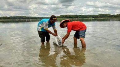 Photo of Pokdarwis Pondok Indah Taburkan Benih Ikan di Waduk Pondok Bersama Petugas DAS Solo