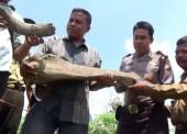 Ditemukan Benda Mirip Fosil di Desa Rejuno Ngawi