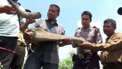 Photo of Ditemukan Benda Mirip Fosil di Desa Rejuno Ngawi