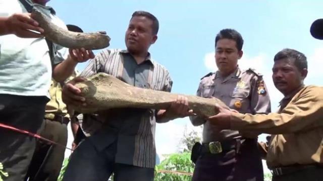 Ditemukan tulang belulang yang diduga mirip fosil di desa Rejuno, Karangjati, Selasa (27/03). Foto-Istimewa/Asfi M