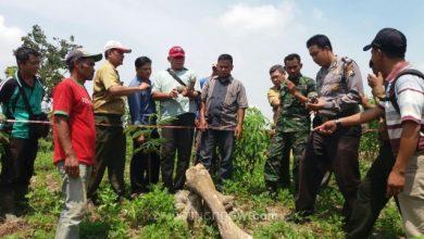 Photo of Disparpora Ngawi Koordinasi dengan Tim Museum Trinil Teliti Temuan Dugaan Fosil