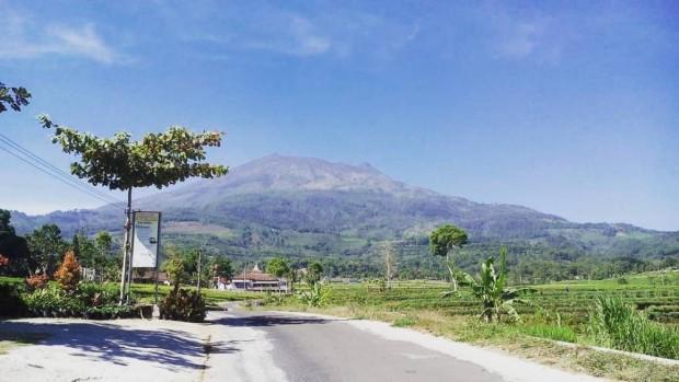 KKN-PPM UGM Bangun Homestay di Dekat Kebun Teh Jamus Ngawi