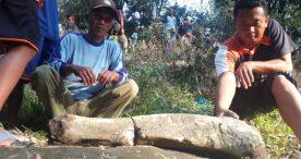 Warga Temukan Fosil Gajah Purba di Sungai Ketonggo Paron
