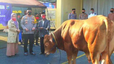 Photo of Idul Adha 1441 H, Kapolres Ngawi Serahkan Hewan Kurban Sejumlah 5 Ekor Sapi dan 33 Ekor Kambing